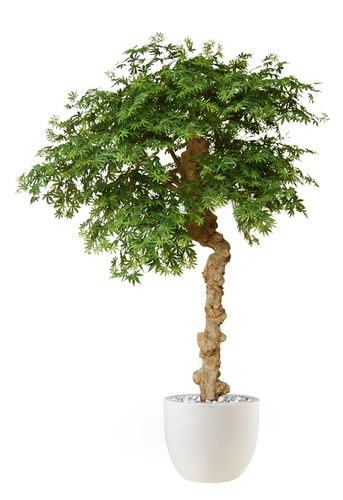 Maple Nidra 250 cm Green